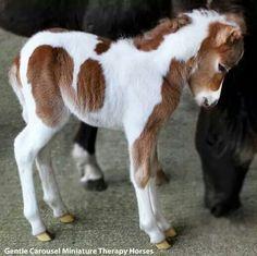 Mini baby...
