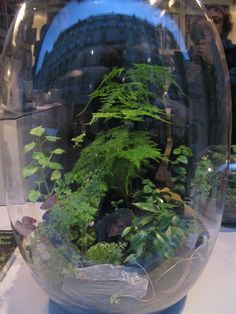 good balance of plant types and heights of plants in this terrarium