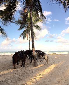 Horseback Riding on the Beach in Punta Cana Dominican Republic!