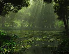 forest photography | Green Forest