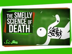 The Science of Decomposing Bodies - YouTube