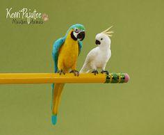 Dollhouse Miniature 1:12 Parrots