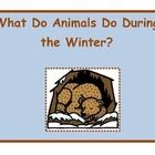 This in an informative book that explains what animals do in the winter.This packet includes:*Important words page*Information on migration*Inf...
