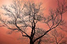 Baum, Baum Oben, Kahler Baum, Kahlen Ast, Winter Baum