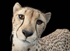 Photographer works to save endangered animals