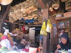 Bird market, Yogyakarta, Java
