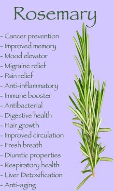 Health Benefits of Rosemary, now commonly available in Indian vegetable markets. Grows easily too. | ayapics