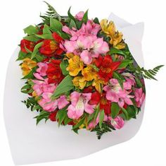 Alstromeria Deluxe is a perfect gift for under the Christmas tree this year! Flying Flowers, Brownie Points, Fresh Flowers, Good Books, Floral Wreath, Christmas Tree, Wreaths, Beautiful Bouquets, Colour
