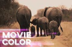 In this Adobe Premiere Pro tutorial, we'll take a look at how to quickly and precisely color grade your footage and movies by exporting...