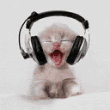 The perfect Headphones Emoji MusicLover Animated GIF for your conversation. Discover and Share the best GIFs on Tenor. Kitten Gif, Cat Gif, Cat Scratch Disease, Dancing Animated Gif, Rare Cats, Cute Little Kittens, Cat Icon, Pet Vet, Owning A Cat