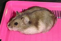 1000 images about hammies hammies on pinterest