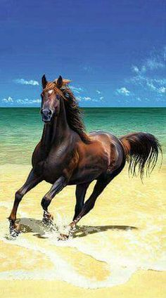Gallop on the beach. Beautiful horse!
