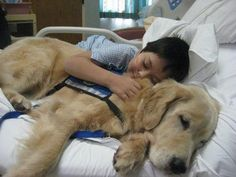 Day in the life of a therapy dog <3