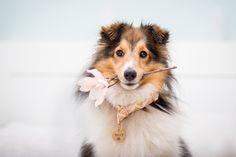 Hund hält Blume im Maul