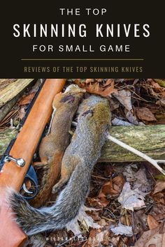 Looking for the best skinning knife for your next small game hunting expedition? We look at our Five Favorites.  #Hunting #LearnToHunt #FieldDressing #Skinning #SmallGame #SmallGameHunting #deerhuntingknife Squirrel Hunting, Deer Hunting Tips, Hunting Gear, Pork Shoulder Picnic Roast, Turkey Hunting Season, Crossbow Targets, Turkey Calling, Best Turkey, Skinning Knife