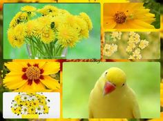 yellow love Collage, Bird, Yellow, Flowers, Animals, Beauty, Collages, Animales, Animaux