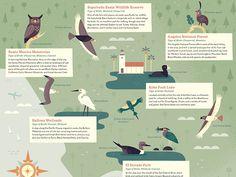 Birding Los Angeles