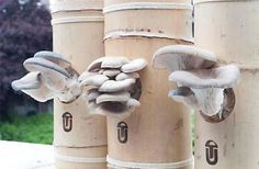 Our greatest success was in our mushroom research. We created a process that allows us to grow mushrooms on waste coffee at the same speed a...