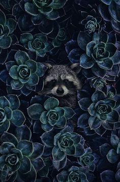 my favavorite raccoon kunst Tier Wallpaper, Animal Wallpaper, Cute Baby Animals, Animals And Pets, Beautiful Creatures, Animals Beautiful, Cute Wallpapers, Wallpaper Backgrounds, Animal Photography