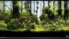 LANG VIKTOR For info about this aquascape and to give it a rating click the link in our profile!