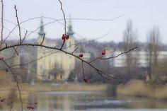#budapest #újbuda #feneketlentó #január #tél #mik #hungary #ig_budapest Hungary, Budapest, Bird, Animals, Instagram, January, Animales, Animaux, Birds