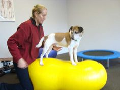 Animal Physiotherapy can take many forms, including exercises to help dogs be stronger - Animal Physio NZ