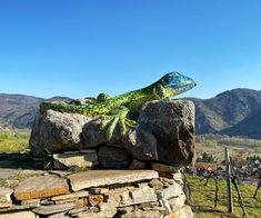 Austria, Hiking, Camping, Mountains, Nature, Travel, Sculpture, Travel Advice, Destinations