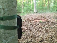 #CritterLick site all set up #trailcameraphotos
