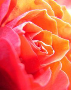 sunny overexposure   Flickr - Photo Sharing!