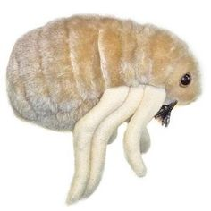 Giant Microbes Flea (Ctenocephalides felis): If you're wondering why Max is vigorously scratching, and feeling a little itchy yourself, we may have the answer! Our fleas won't bite, and even your pets will be happy to have them around. Cool Gifts For Kids, Kids Gifts, Giant Microbes, Plush Microbes, Bug Toys, Plush Animals, Plush Dolls, Your Pet, Pets