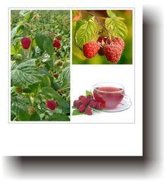 Plante medicinale – ZMEUR Strawberry, Fruit, Therapy, Varicose Veins, Plant, Strawberry Fruit, Strawberries, Strawberry Plant