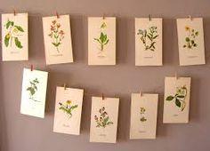 Botanical print collection.