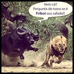 Vem cá! Little Memes, Funny Memes, Jokes, Funny Cats And Dogs, Good Humor, Really Funny, Funny Photos, Animals And Pets, Haha