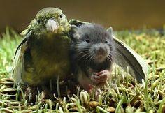 Bird and mouse adorable strange animal friendship