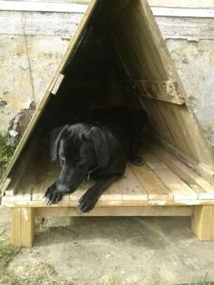 dog house made out of pallets