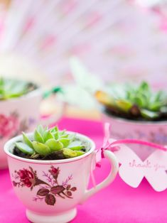 Easy party favor idea, perfect for a tea party or garden party, send guests home with a succulent favor potted in a tea cup! Tea cups can be thrifted from a local antique shop and succulents bought in bulk for a cheap thank you gift. Garden Party Favors, Succulent Wedding Favors, Bridal Shower Favors Diy, Bridal Shower Party, Bridal Gifts, Succulents, Baby Sprinkle, Relief Society, Summer Garden