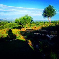 Provence (by Ines de la Fressange)