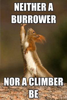 ... Shakespeare Animals on Pinterest | Squirrel, Animals and Funny bears  Animal Shakespeare Memes