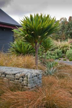 Carex testacea and Cordyline sp.