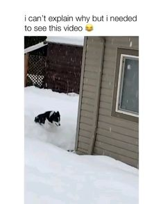 This needs to go viral Via insta: - - This needs to go viral Via insta: Hunde Funny Animal Jokes, Funny Dog Memes, Really Funny Memes, Funny Animal Videos, Animal Memes, Funny Captions, Animal Humor, Animal Quotes, Dog Quotes