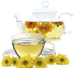 Mothers, Want to Have a Glass of Goodness of Chrysanthemum Tea During Pregnancy? Read This First! Chrysanthemum Tea Benefits, Different Types Of Tea, Healthy Juices, Health Articles, Herbal Tea, For Your Health, Health Benefits, Herbalism, Good Things