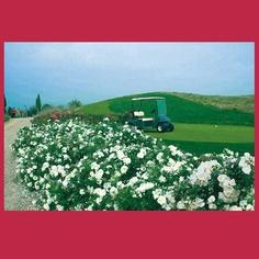 DECOROSIERS : Présentation, en avant-première, d'un nouveau rosier Verdia Décorosiers au Salon du Végétal 2013.  Le Salon du Végétal est un formidable rendez-vous de la filière végétale. C'est également l'occasion, pour nous, de vous rencontrer, d'échanger.    En 2013, les projecteurs seront tournés vers la marque DECOROSIERS : en effet, nous avons le plaisir de vous convier sur notre stand afin de découvrir le petit dernier de la gamme !