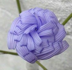 The Chicory Flower | 22 Insanely Cool Conversation-Piece Plants For Your Garden