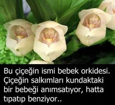 Ve hüve ala külli şeyin kadir. Muslim Pray, Comedy Zone, Interesting Information, Science News, Meaningful Quotes, Islamic Quotes, Beautiful Words, Inspire Me, Did You Know