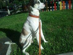 Esto es un perro: husky + pastor alemán + american stanford...¿Cuánto? 0 euros. Yo no apoyo la industria animal.