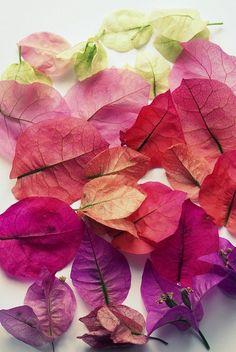 *Bougainvillea  petals