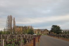 Wynn's Coonawarra Estate.  A beautiful place to start a wine tour in Coonawarra. To learn more about #Adelaide | #SouthAustralia, click here: http://www.greatwinecapitals.com/capitals/adelaide-south-australia