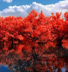 Brilliant Red Autumn Trees~Fall brings all the bright colors~ The trees are Stunning! ♥