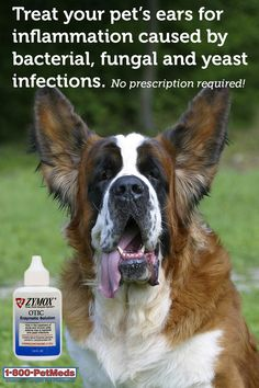 Zymox Otic with Hydrocortisone is an OTC solution used in cats and dogs for the treatment of acute and chronic otitis externa due to bacterial, fungal and yeast infections with itching and inflammation.