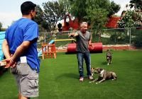 Ask Cesar for Help: How To Approach Stray Dogs | Cesar Millan